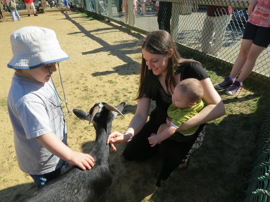 York's Wild Kingdom Zoo and Fun Park : Petting Zoo