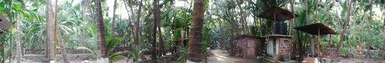 Osari Homestay: Coconut plantation and path leading to the beach