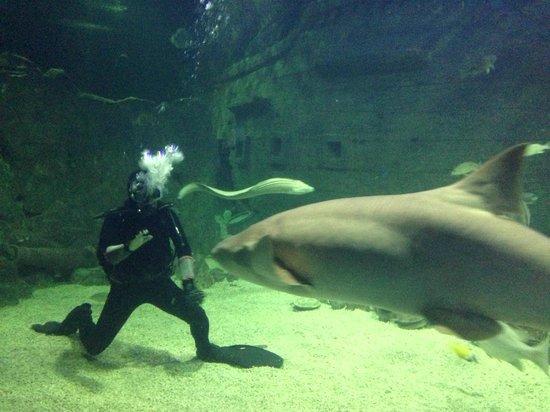 Kurortny Gorodok, روسيا: Кормление акулы