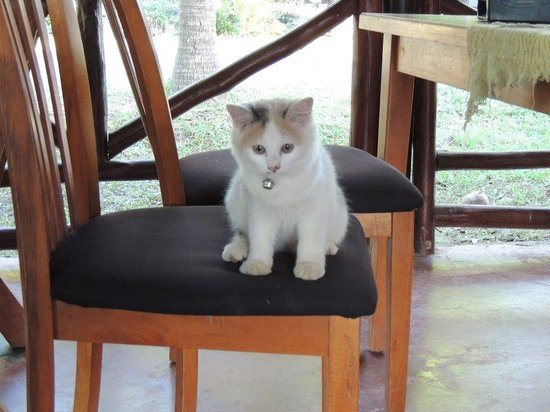 Oasis Yoga Bungalows: small cat