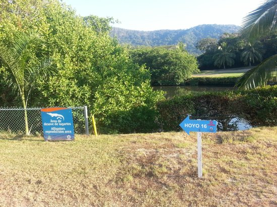Campo de Golf Ixtapa: Crocs...