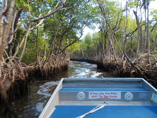Everglades City Airboat Tours: mangrove channel