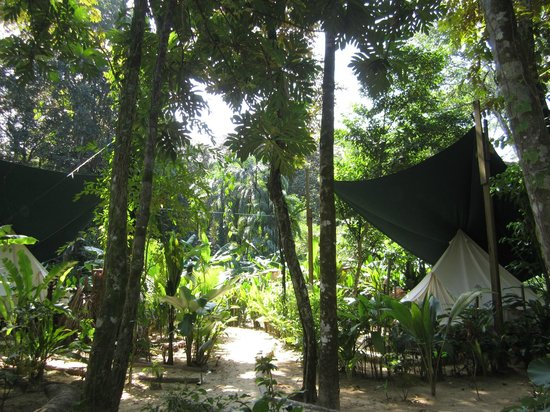 Palmar Beach Lodge : view front tent