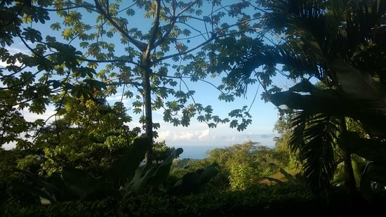 Oxygen Jungle Villas: view from our room