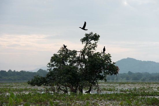 Uga Ulagalla : Bird