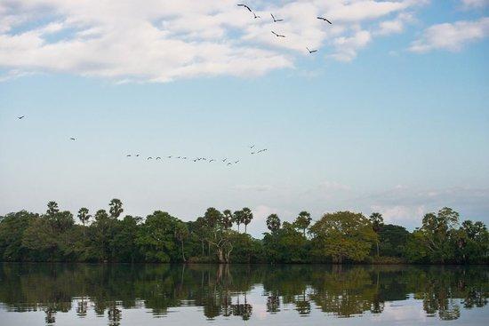 Uga Ulagalla : Birds