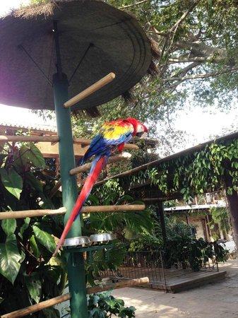Casa Santo Domingo: Arara