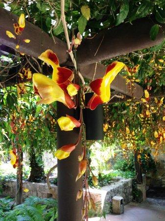 Casa Santo Domingo: Paisagismo