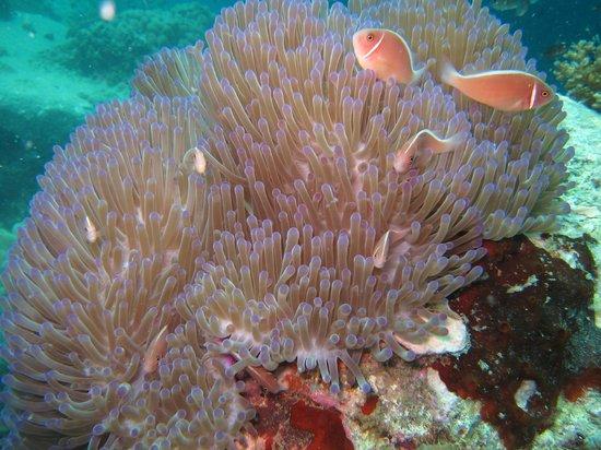 Discovery Dive Centre: Scuba Dive