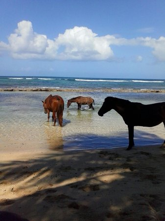 Epic Adventure Tours - Private Day Tours: Vieques!