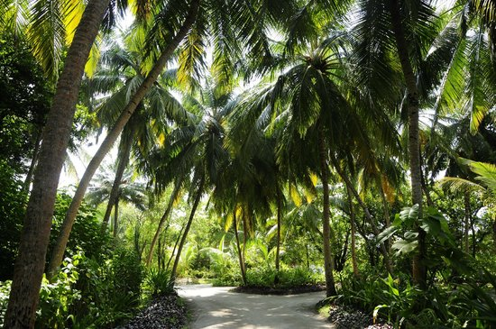Kuramathi Island Resort: Hotel grounds