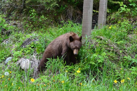 Wedgwood Retreat : If you're lucky, you'll see a bear!