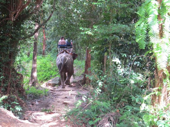 Nosey Parker's Elephant Camp - Private Day Tours : Trail Ride