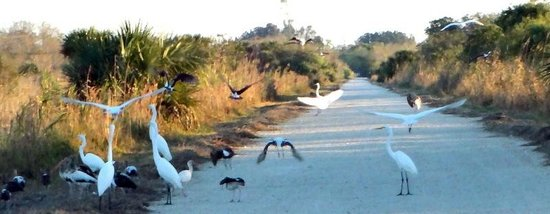 "Fakahatchee Strand Preserve State Park & Boardwalk: A ""bird"" party!"