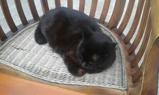 Las Marismas de Corralejo : Cat ♥ Las marismas