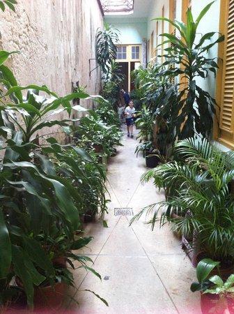 Cary y Nilo: giardino tra la stanza e sala colazione