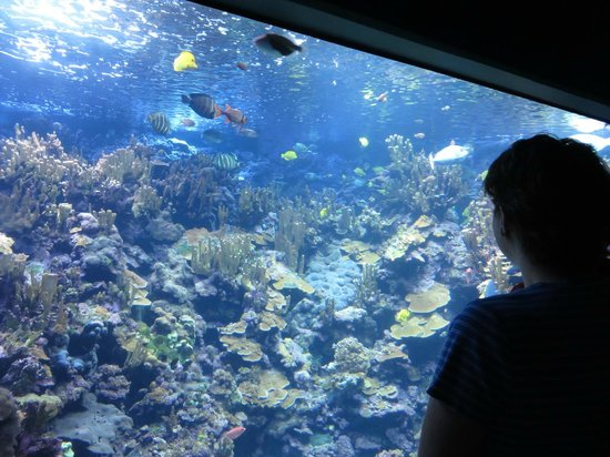 Maui Ocean Center: All the fish you would want to see without getting wet.