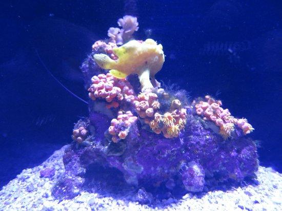 Maui Ocean Center: More coral.