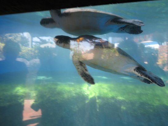 Maui Ocean Center: You won't miss the turtles here.