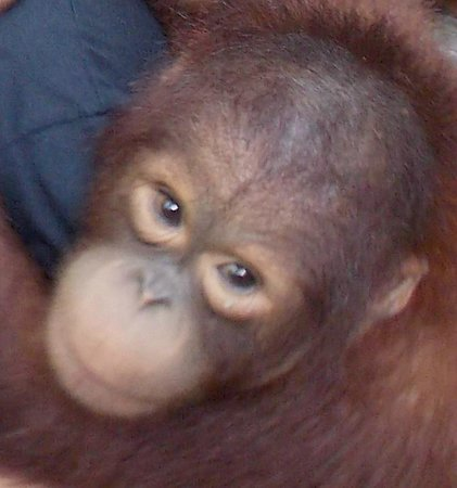 Matang Wildlife Centre: How could any body hurt an animal as beautiful as this little guy