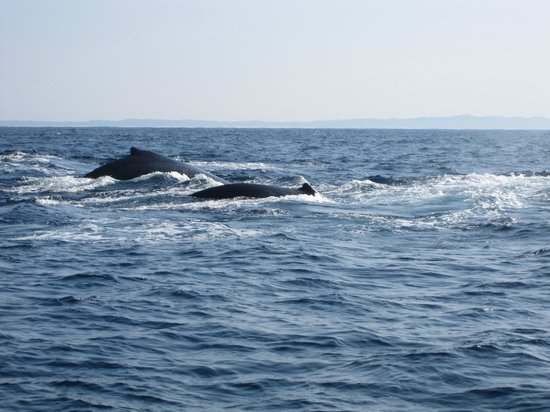 St Lucia Tours & Charters: Humpbacks