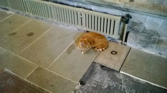 Wells Cathedral: Cathedral cat on mouse duty