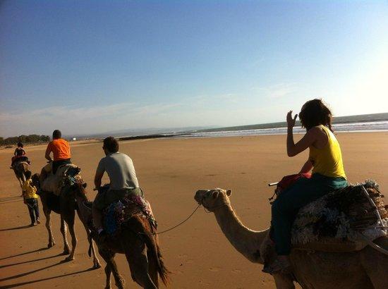 Riad Al Zahia: con los camellos por la playa!