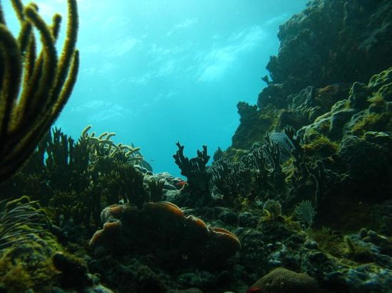 Aqua Marine Dive Center: diving