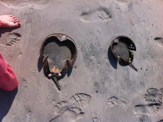 Reges Oceanfront Resort: horseshow