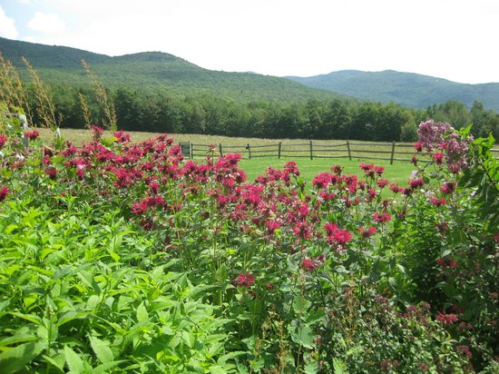 Windekind Farm: Mountain Views
