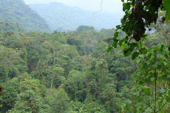 Ruboni Community Camp: deep in the bush