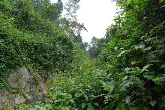 Ruboni Community Camp: hiking