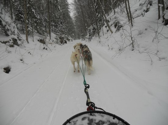 Barking Brook Sled Dog Adventures - Day Trips: Out on the trail!