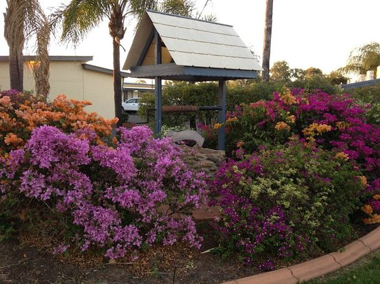 Kings Motor Inn: Grounds are attractive and well kept