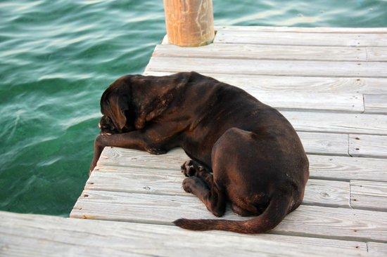 Isla Marisol Resort : Bowser the island dog
