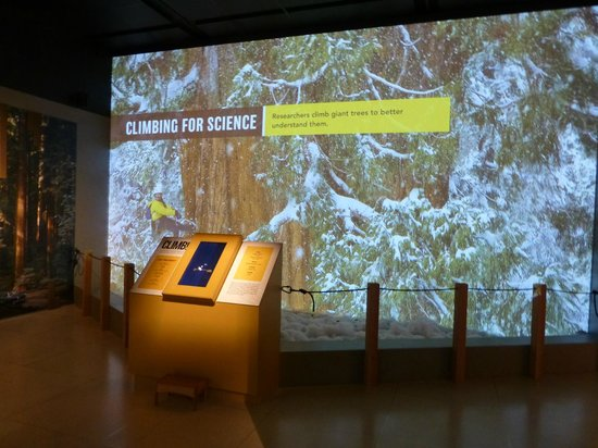 National Geographic Museum: Permanent exhibit - about giant sequoias