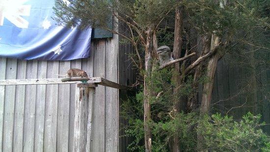 Tasmanian Devil Unzoo: Bird Show