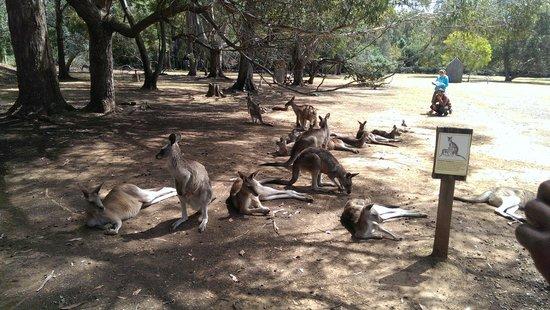 Tasmanian Devil Unzoo: Entering the Kangaroo Pen