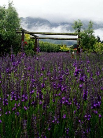 Dylans Country Cottages: The Lavender Farm