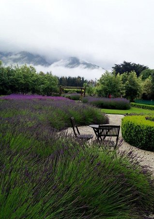 Dylans Country Cottages : More of the Lavender Farm