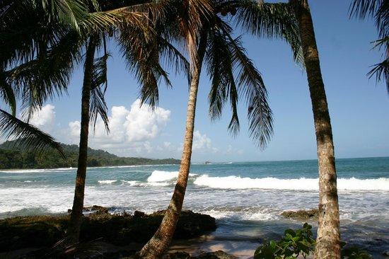 Physis Caribbean Bed & Breakfast: Beach