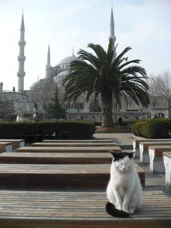 Blue Mosque: Вид на Голубую мечеть с площади