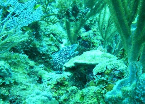 Aqua Marine Dive Center: spotted eel