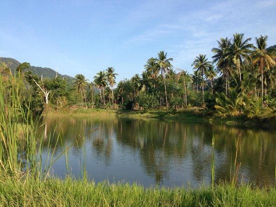 Koh Chang Lagoon Resort: заповедная зона рядом с отелем