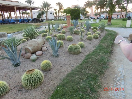 Beach Albatros Resort: Gartenanlage
