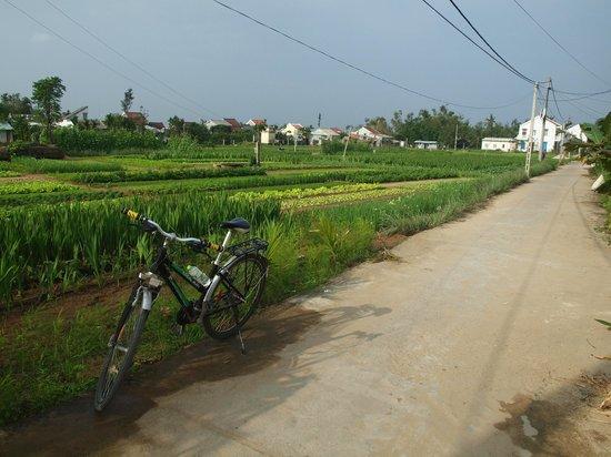 Hoian Cycling: Vegetable gardens near Hoi An