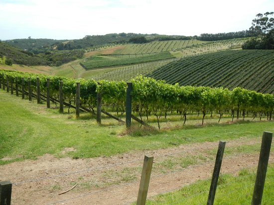 Cable Bay Vineyards Winery and Restaurant : Cable Bay Vineyard, Waiheke Island, New Zealand