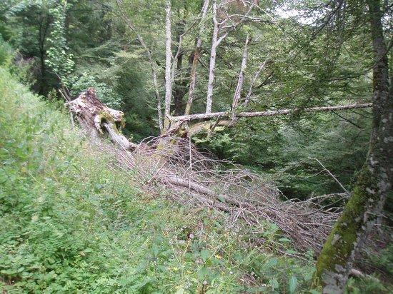 Bosque del Faedo: Hay que cuidar la fragilidad del entorno
