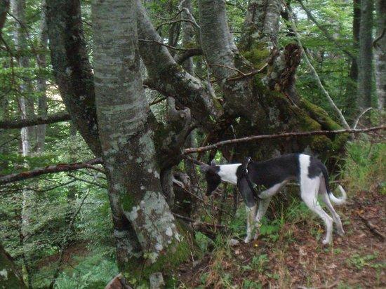 Bosque del Faedo: Explorando