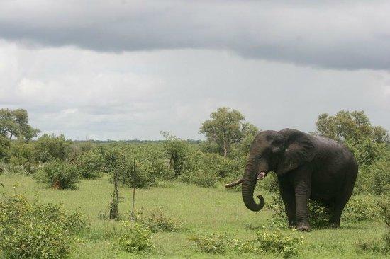 Punda Maria Restcamp: Elephant